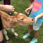 Maleny_Dairies_Reviews