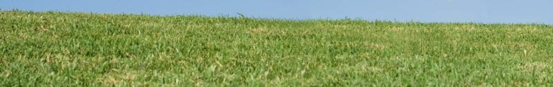banner of green grass and blue sky