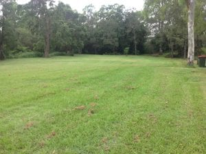 open field at gaythorne, lots of space to play ball games.