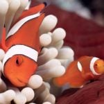 Great Barrier Reef Sustainability for Kids NEMO