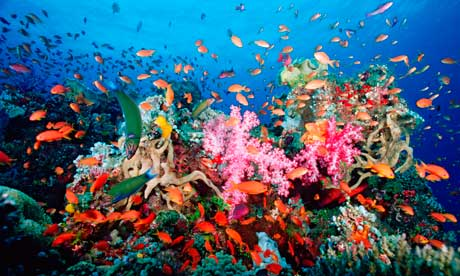 Image of the reef