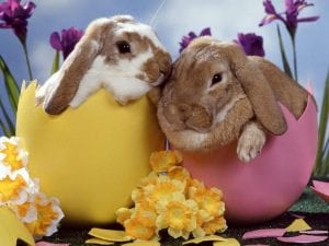 what is open easter public holiday