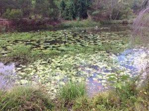 Varsity Lakes pond