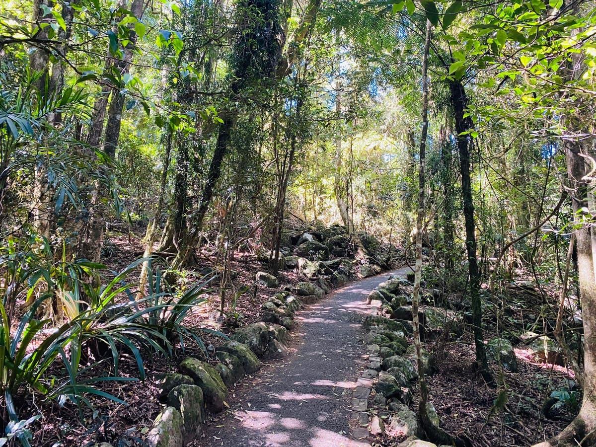 Springbrook National Park walking tracks