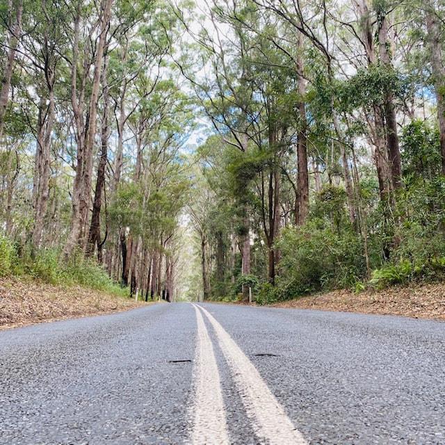 Windy roads in Springbrook National Park
