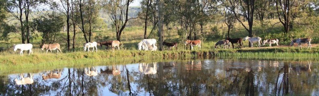 Donkey farm stays near brisbane
