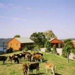 farm stays near brisbane