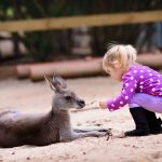 australia day with kids kangaroo