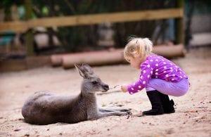 australia day with kids kangaroo