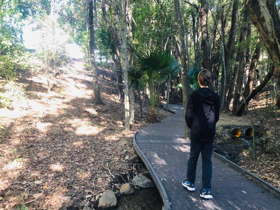Fern Tree Lane at Kholo Botanical Gardens