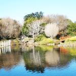 Toowoomba japanese gardens Feb