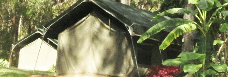 tamborinee mountain camping tent among the trees