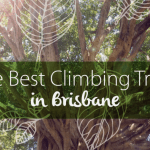 Brisbane best climbing trees - families magazine - feature image