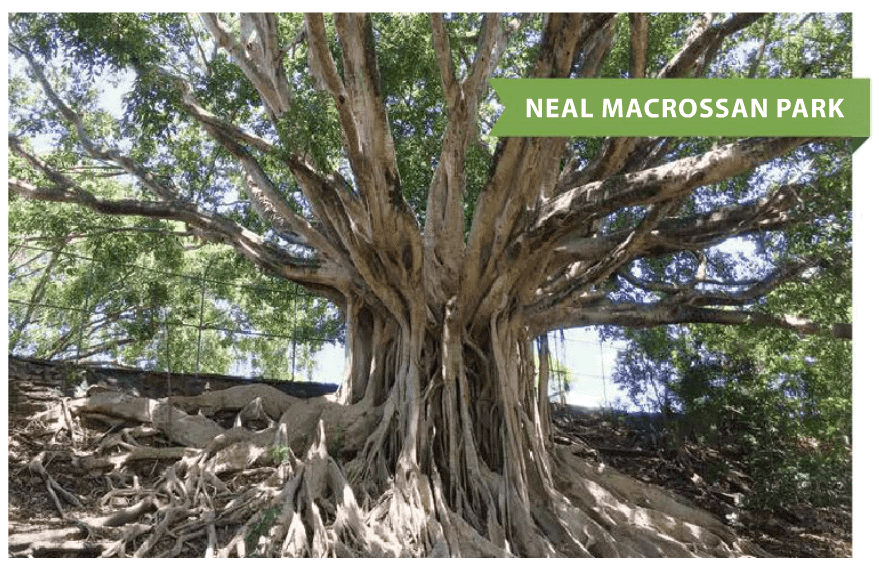Brisbane best climbing trees - families magazine - neal macrossan