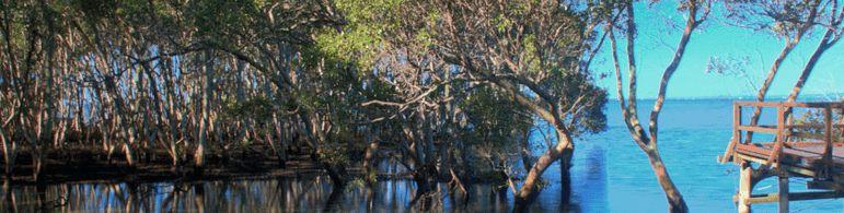 Things To Do With the Kids in Wynnum Mangrove Boardwalk