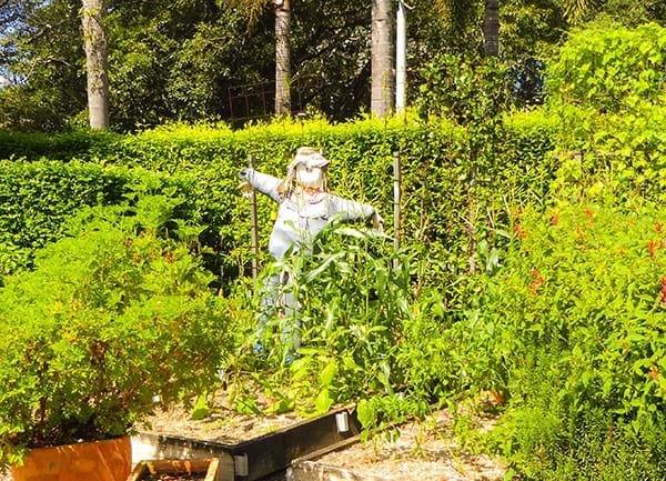 Roma Street Parkland Scarecrow