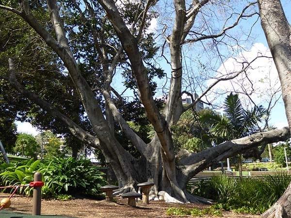 Roma Street Parklands - Climbing tree