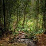 Bunya Mountains Families Review