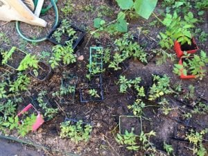 school holiday gardening project