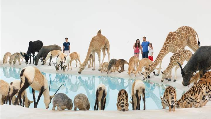 Zoo animals at water hole GOMA - date night under $20