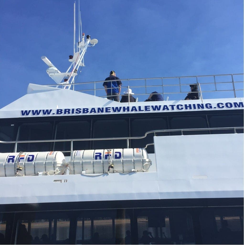 Brisbane Whale Watching with kids 2