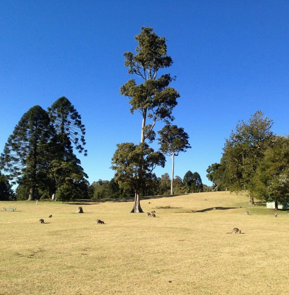 Bunya Mountains Review 2