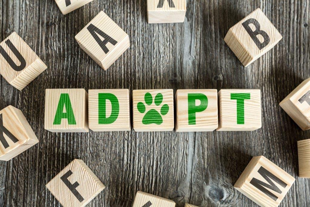 adopt a rescue dog brisbane