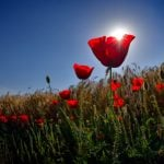 ANZAC Day Facts for Kids