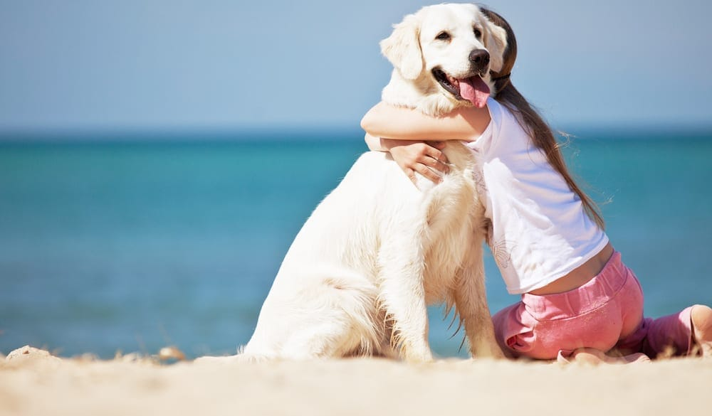 Dog Parks And Beaches On The Gold Coast