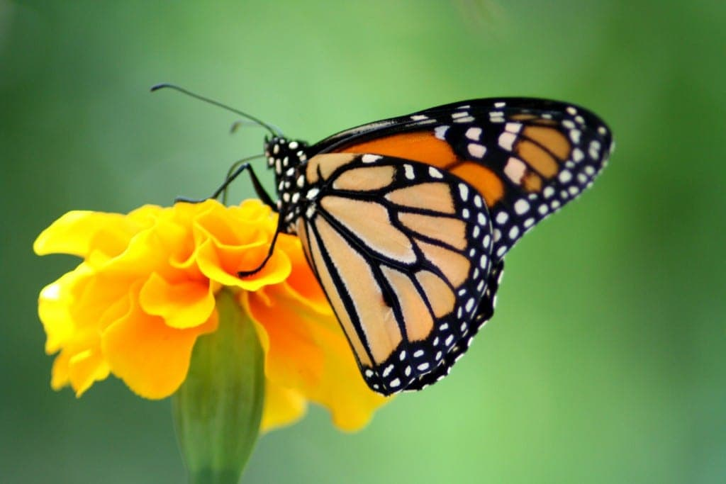 Where to see Butterflies