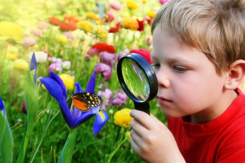 school hholiday activites for animal lovers - Butterflies around Brisbane
