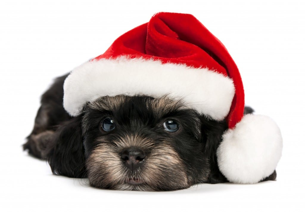 Santa Paws Pet Photos