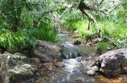 Mapleton National Park gheerulla-creek