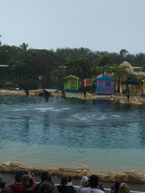 sea creatures are plentiful at Sea World Gold Coast