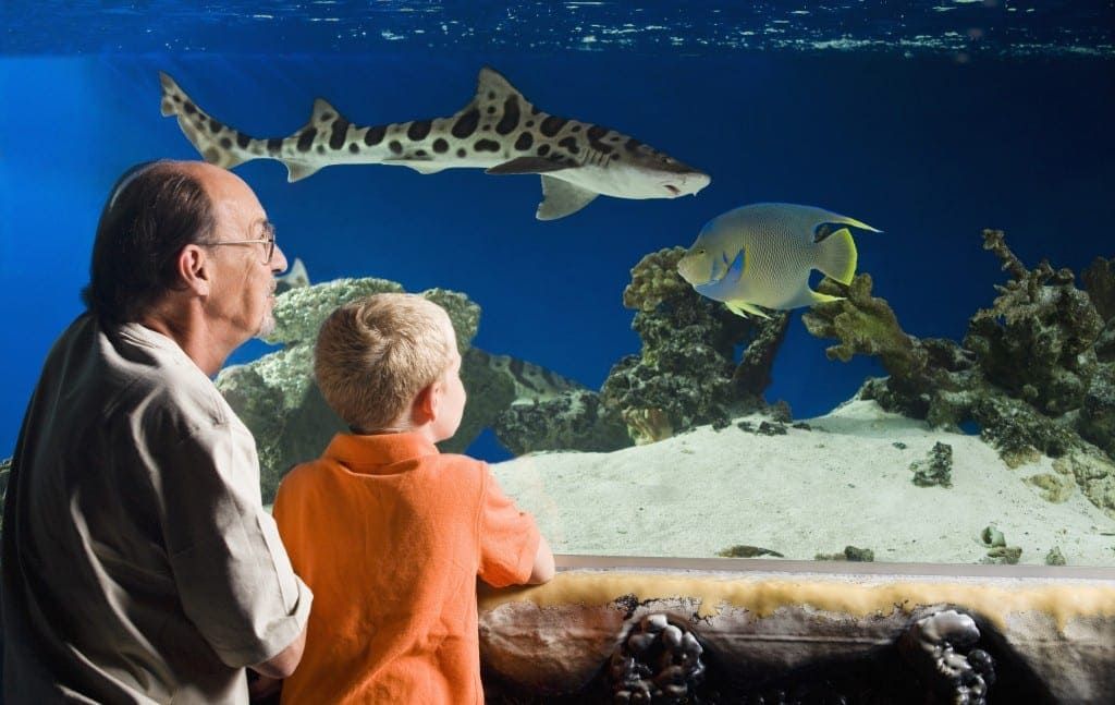 places to take kids who love sea creatures