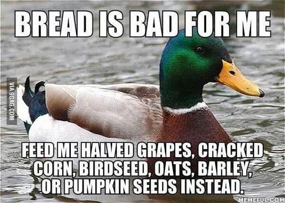 ddo not feed ducks bread