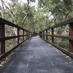Wynnum Mangrove Boardwalk