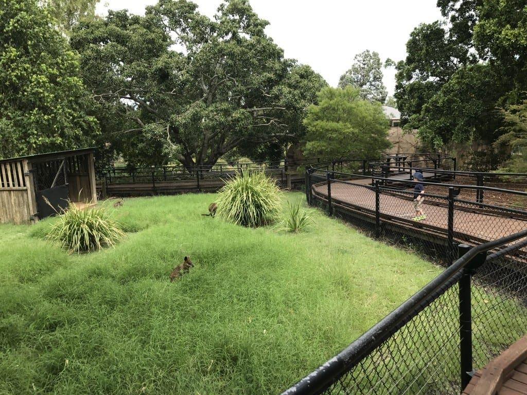 Ipswich Nature Centre - Ipswich Zoo