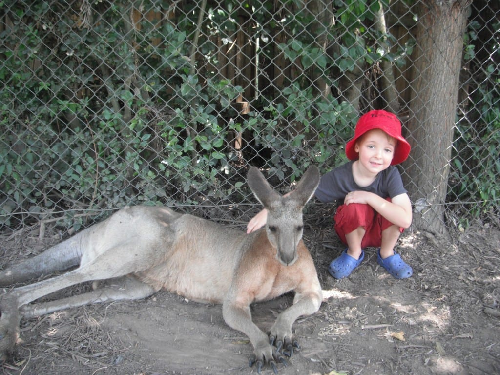 Lone Pine Koala Sanctuary - free and cheap australia zoo tickets