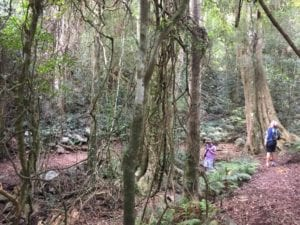 Things to do at the Bunya Mountains