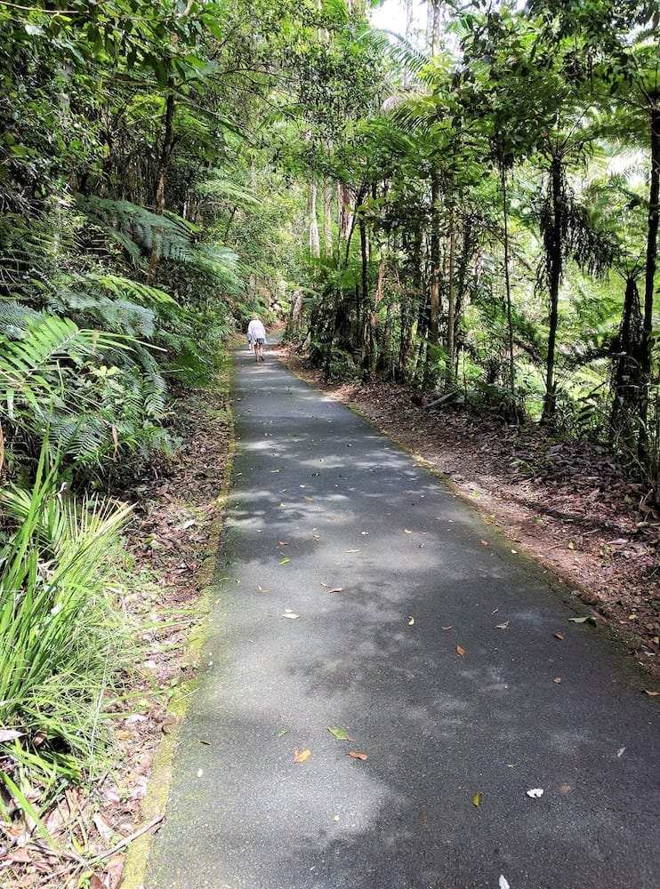 Family friendly walking track at Cougal Cascades