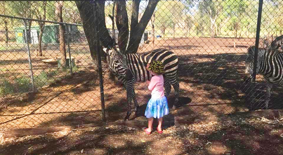 Darling Downs Zoo child and zebra