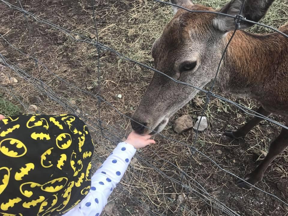 Darling Downs Zoo child feeding deer