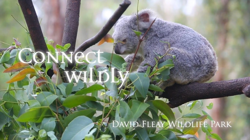David Fleay Wildlife Park