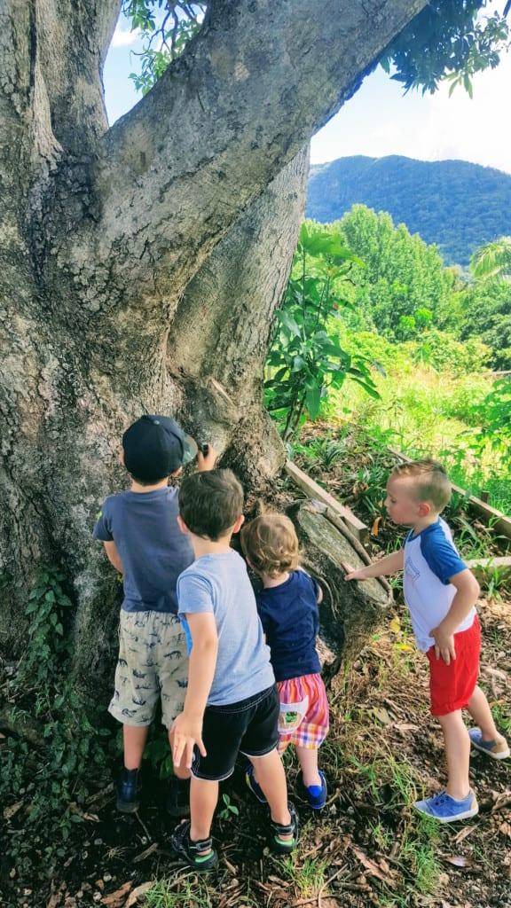 Freeman's Organic Farm children exploring outdoors