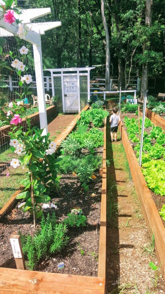 Freeman's Organic Farm market fresh food in garden