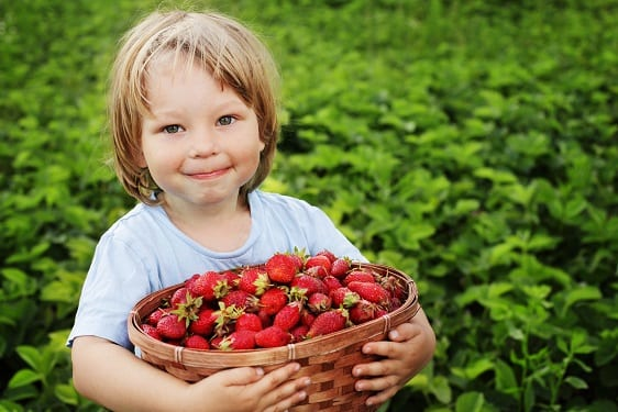 things to do on the sunshine coast with kids berries