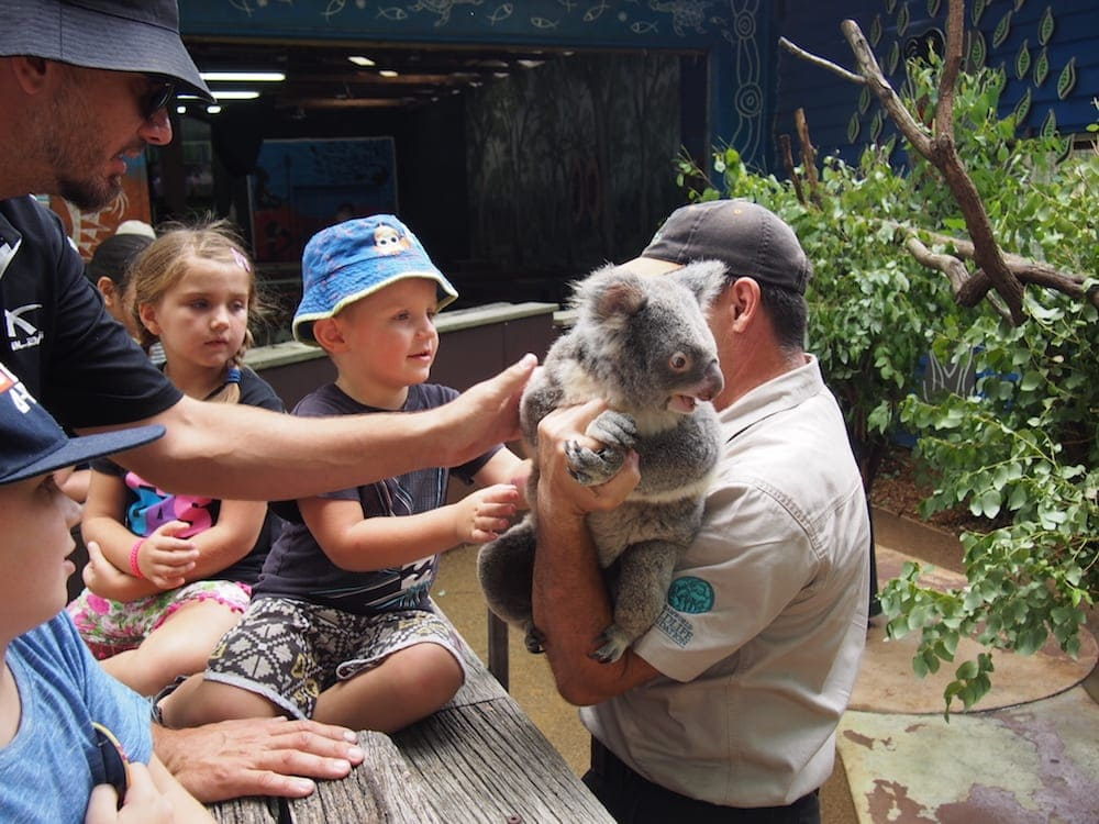 family petting a koala dreamworld for families
