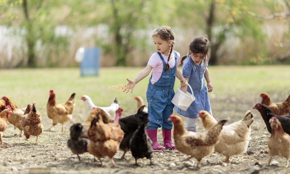 Farmstays Byron Bay Two little girl feeding chickens