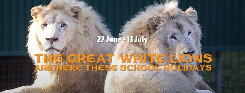 Lions at Dreamworld for the Gold Coast School Holidays